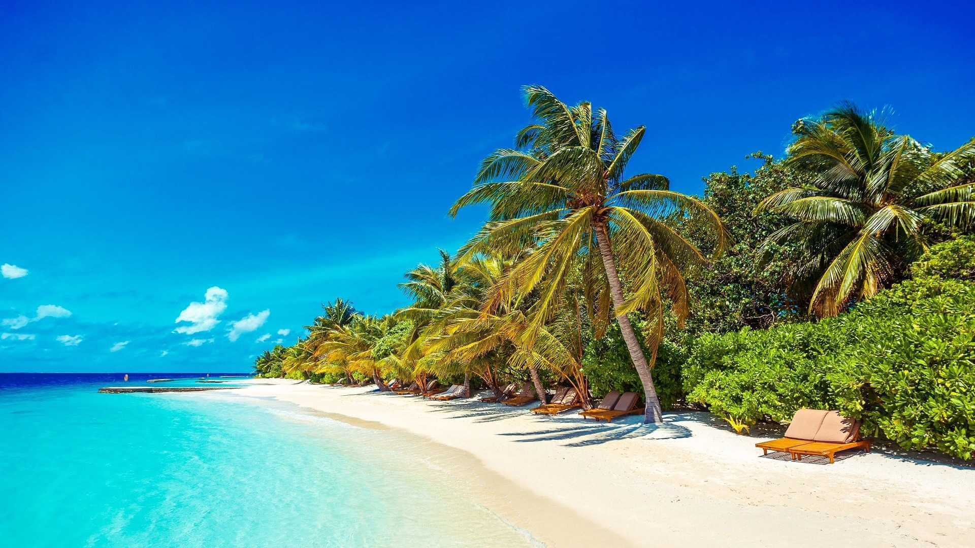 Lily Beach Resort e Spa 5* - Foto della spiaggia con vegetazione e sdraio